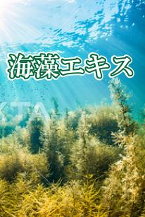 海藻エキス